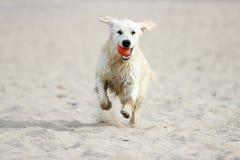 running sand för hund arkivfoto