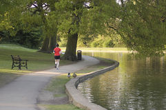 Running Senior. Senior running alone on a Spring evening around the lake at St Albans Verulamium Park, Hertfordshire, England. Keeping fit and doing healthy royalty free stock images