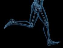 Running skeleton. 3D render of close up of a medical skeleton legs running Royalty Free Stock Images