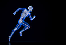 Running skeleton. Contains clipping path. 3d illustration Stock Photo
