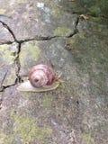 Running Slug Royalty Free Stock Images
