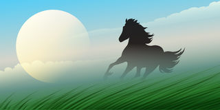 Running Stallion Stock Image