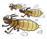 Running termites Royalty Free Stock Photography