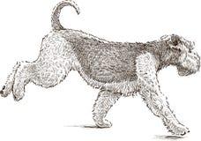 Running Terrier Royaltyfri Fotografi