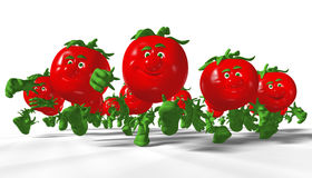 Running tomatoes. Stock Photography