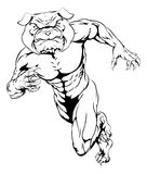 Running tough bulldog. An illustration of a scary bulldog sports mascot sprinting Stock Image