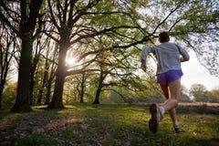 running trail Arkivbild