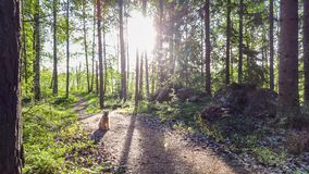 Running trail in the morning royalty free stock image