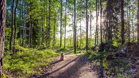 Running trail in the morning royalty free stock images