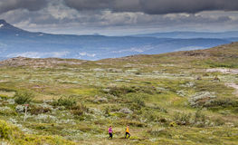 Running. Trail running in the Swedish mountains Royalty Free Stock Image