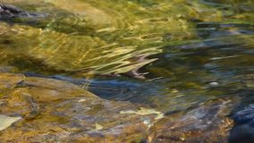 Running transparent water of brook stream stock footage