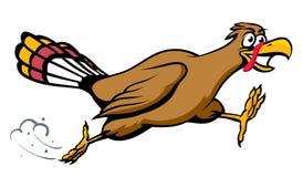 Running Turkey Stock Photo