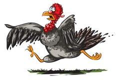 Running turkey Stock Image