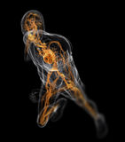 Running - vascular system Royalty Free Stock Photos