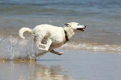 running vatten för hund Arkivfoto