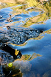running vatten för reflexion Arkivfoto