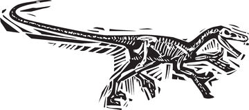 Running Velociraptor Fossil Stock Photo