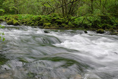 Running water. Water running in green wet forest among mossy stones Royalty Free Stock Photography