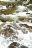 Running water beneath Pines as creek runs through Payette national Forest near McCall Idaho Stock Photos