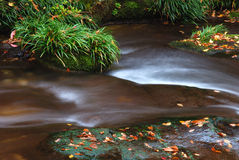 Running water and fallen leaf Royalty Free Stock Images