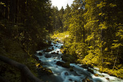 Running Water. Small river in a forest, interlaken, switzerland Stock Photography