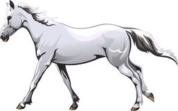 Running white horse. Vector drawing running white horse Royalty Free Stock Photos