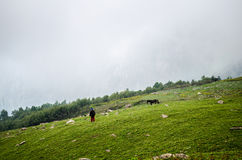 Running in the wild. A horse runs in the wild while a trekker tries to approach it Royalty Free Stock Photos
