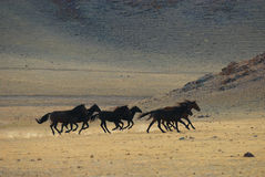 Running wild horses stock photo