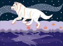 Running wolf the dreamer. Stock Photo