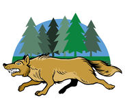 Running Wolf And Pine Trees Royalty Free Stock Photography