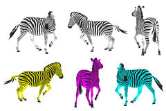Running zebras Royalty Free Stock Image