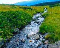 Runningin del río un prado Fotografía de archivo libre de regalías