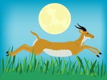 Runninging antelope Royalty Free Stock Image