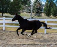 Runnng del cavallo Immagine Stock
