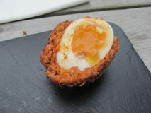 Runny scotch egg yum! Stock Images