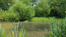 Runnymede共同的老都市池塘 免版税图库摄影