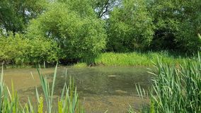Runnymede common old urban pond Royalty Free Stock Photography