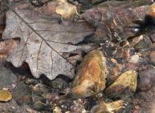runofffjäder Fotografering för Bildbyråer
