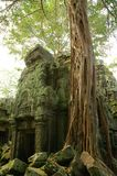 Runs of ancient Cambodian temple. In the jungle Royalty Free Stock Photos