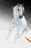 Runs white horse get living from arts scetch Royalty Free Stock Photography