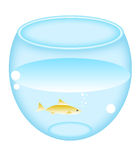 runt akvarium Royaltyfri Foto