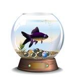 Runt akvarium med en fisk Royaltyfri Foto