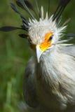 runt om fågel eyes orange white Royaltyfri Bild