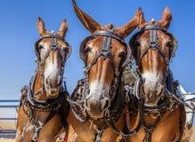 runt om horsing Royaltyfri Bild