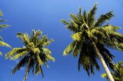 runt om stranden singapore Arkivbilder