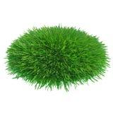 Runt stycke av kantjusterat gräs som ska installeras Arkivfoto