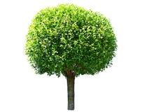 Runt träd Arkivbild