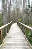 Runway across the forest in a National Reserve Royalty Free Stock Photo