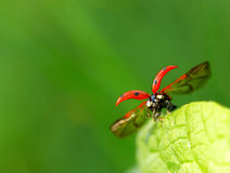 Runway ladybug Royalty Free Stock Images