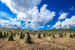 Ruoergai grässlätt, Xiahe, Gannan, Kina royaltyfria foton